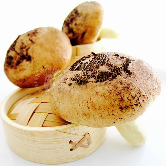 mushroom buns 花菇包